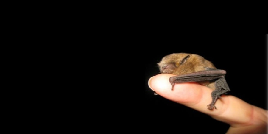 Bat evening at Standedge Tunnel & Visitor Centre