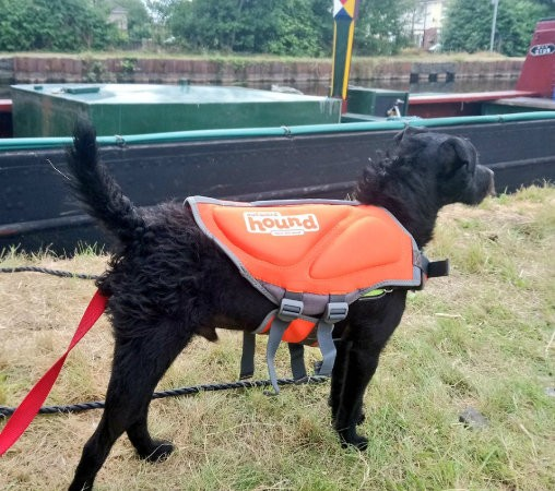 Tommy the coalboat puppy wears a lifejacket