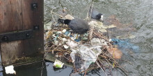 A bird's next made from litter