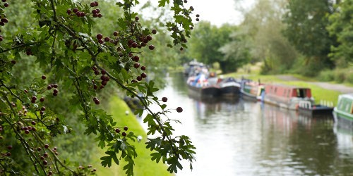 A peaceful scene at Hanwell on the Grand Union Canal