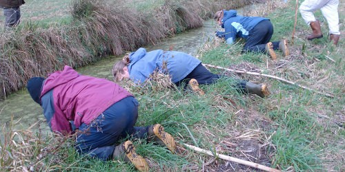 Ecologists looking for signs of water voles