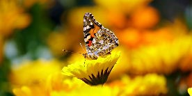 Butterfly, courtesy of Vikramjit Kakati