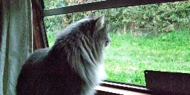 Boat cat looks out at the towpath