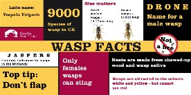 Wasp infographic