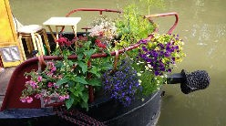 Most edible growing boat shortlist - Susanna