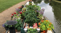 Most edible growing boat shortlist - Suchar Daval