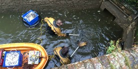 Aylesbury fish rescue from lock