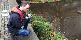 Ecologist Tom King looks at reeds