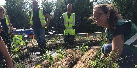 Planting floating islands on Regent's Canal