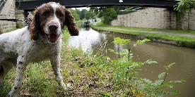It's really important to keep dogs and children away from blue green algae