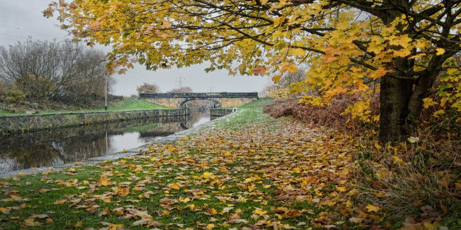 Autumnal view of Wakefield Branch with bridge in background
