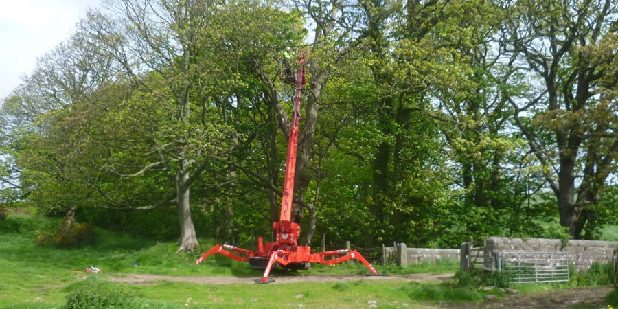A crane cutting trees by the canal