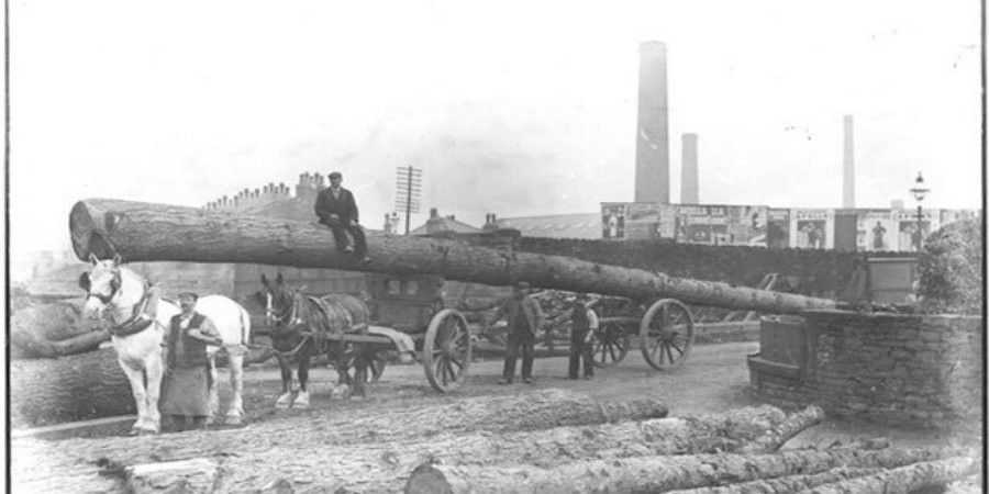 Horses pulling large log at Finsley Gate
