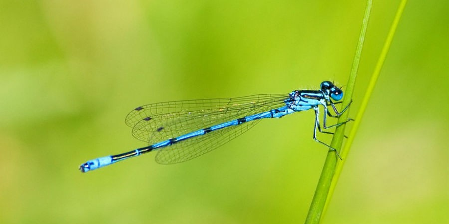Damselfly, courtesy of Karen Arnold