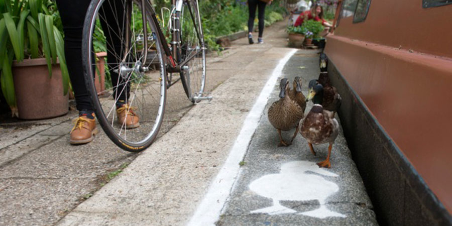 Duck Lanes, Share the Space