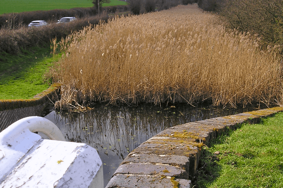 Droitwich Canal full of reeds before restoration