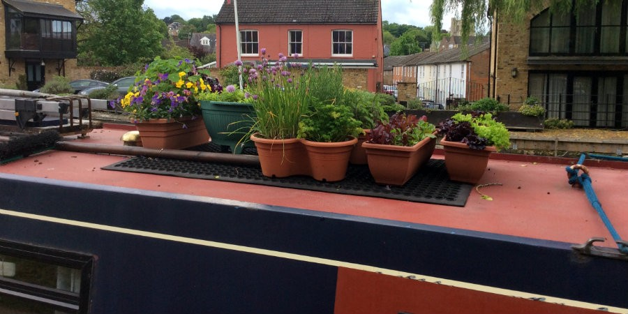 A narrowboat roof garden of herbs, salad and flowers