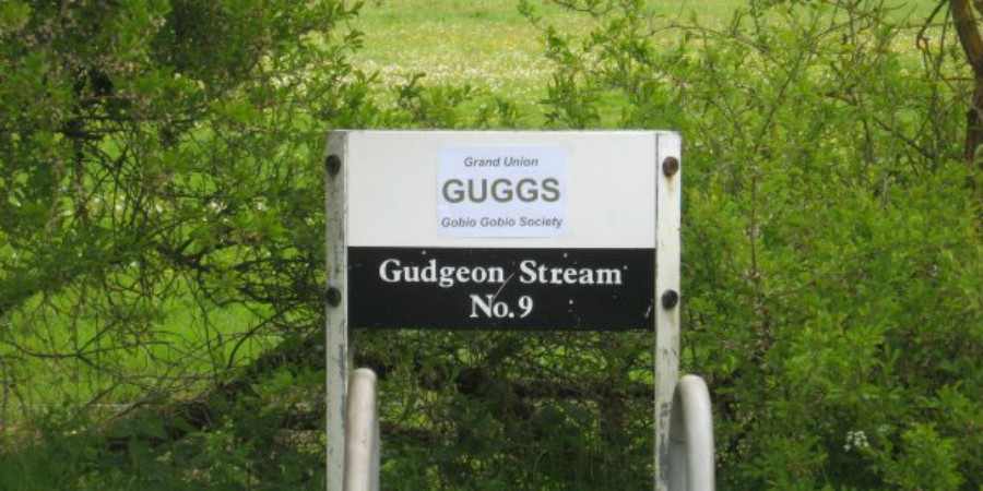 Gudgeon Stream Aylesbury Arm