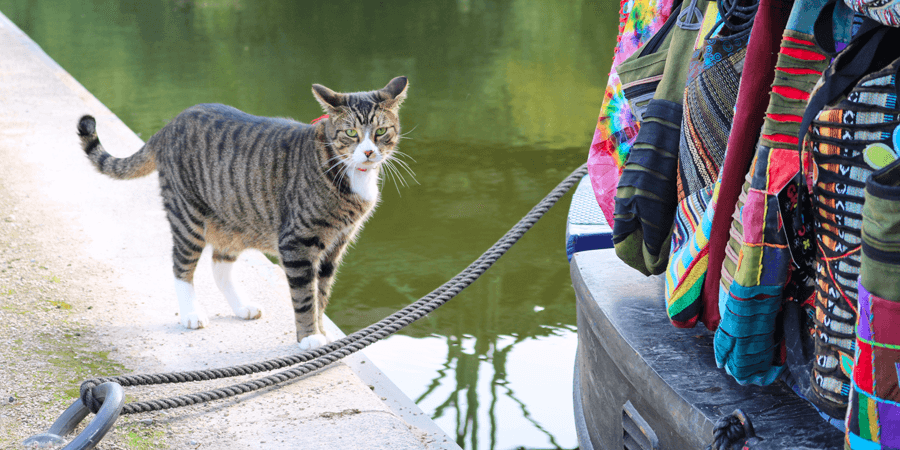 Cat outside the Hippie Boat