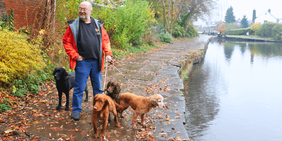 Walking dogs near Marple Locks