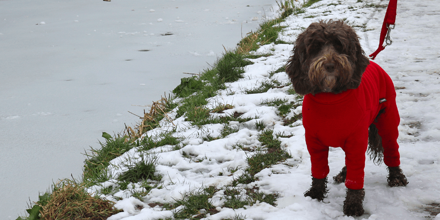 Betsey the dog, walking along the canal