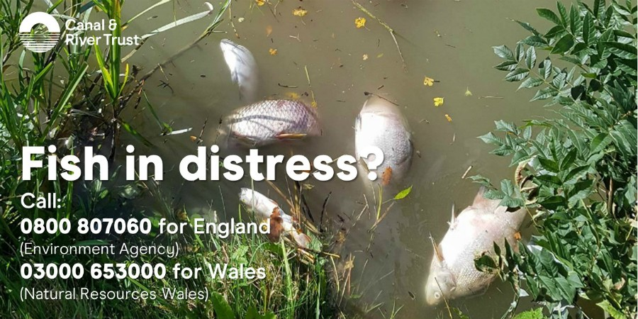 Who to call if you see fish in distress