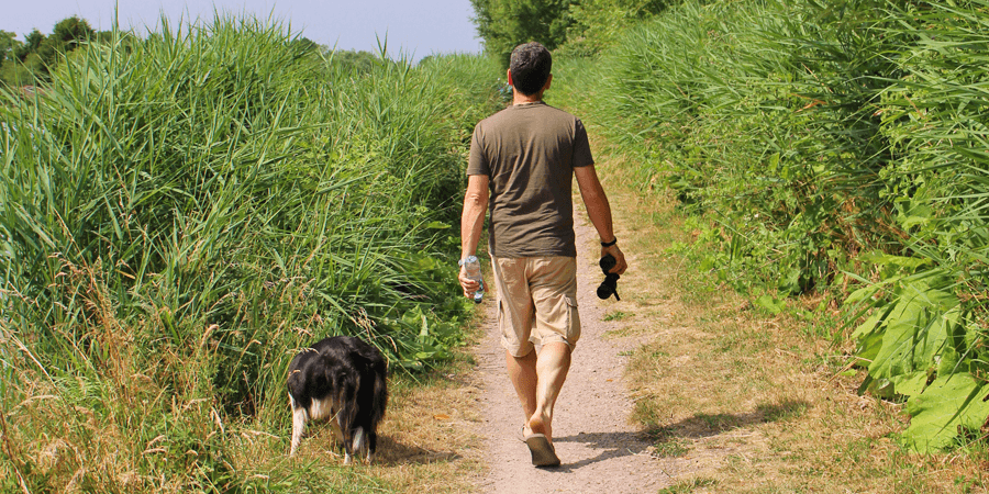 Dog walking in the summer