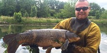 Large carp from fish rescue
