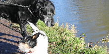 Monty and Maisie, dogs on the Kennet & Avon Canal
