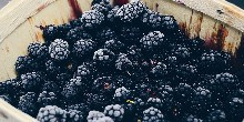 Photo of blackberries
