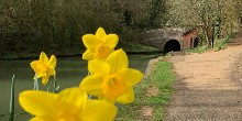 Spring at Blisworth Tunnel