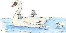 Illustration of a swan and cygnets