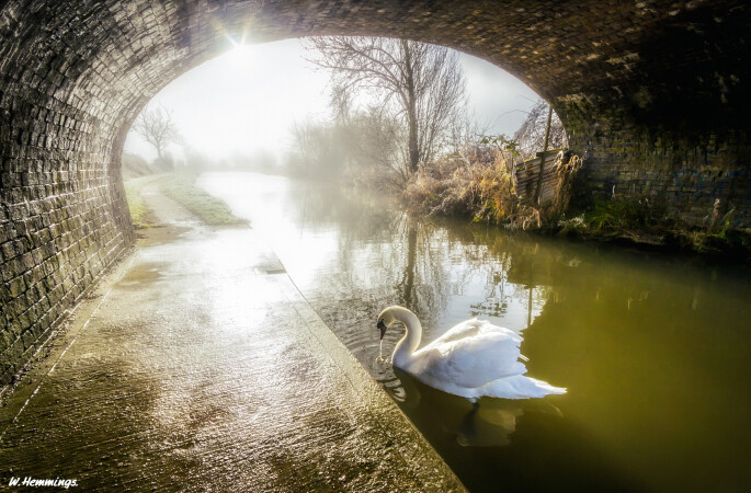 The Swan. by Wayne Hemmings