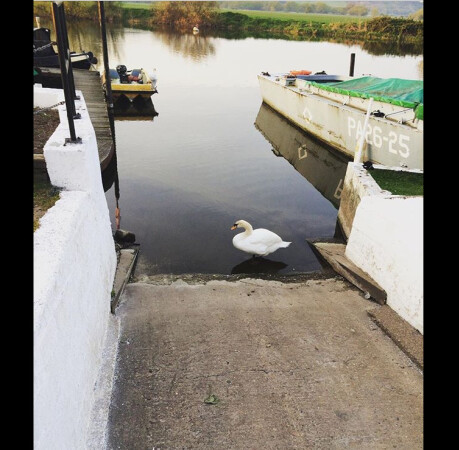 Swan at Dawn, Beeston Marina, Nottingham by Hannah Newbold