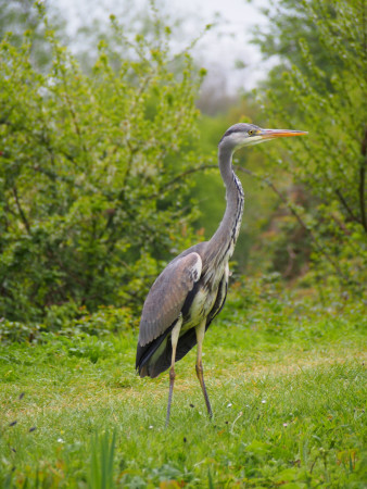 Heron Watch, Kennet & Avon Canal by Kay Sugg